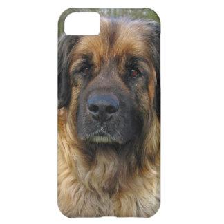 Leonberger dog beautiful photo portrait, gift iPhone 5C case