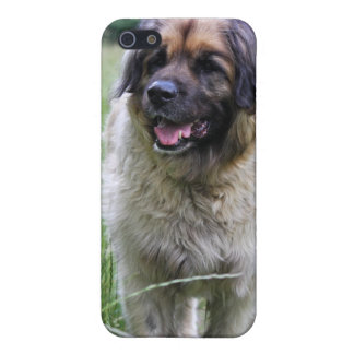 Leonberger dog  iphone 4 case, gift idea