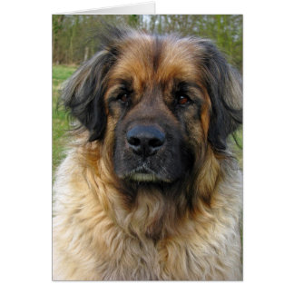 Leonberger dog note card, greeting card