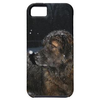 Leonberger I Phone Case