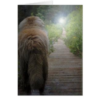 Leonberger Sympathy card