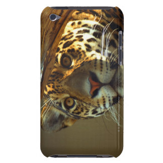 leopard 2 iPod Case-Mate case