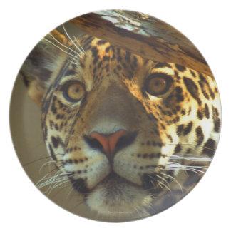 leopard 2 plate
