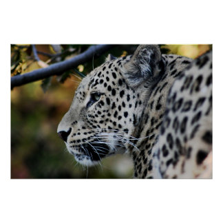 Leopard - Animal Poster