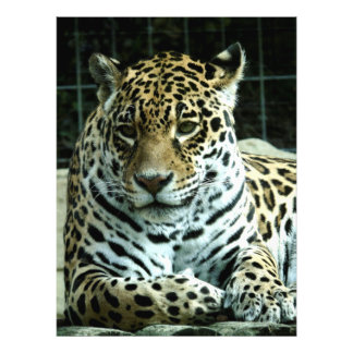 Leopard Art Photo