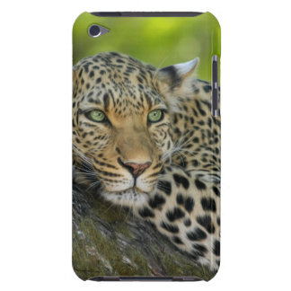 Leopard Barely There iPod Covers