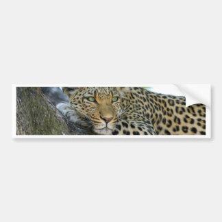 Leopard Bumper Stickers