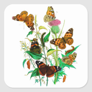 Leopard Butterflies & Caterpillars & Pink Thistle Square Sticker