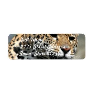 Leopard Cat Mailing Labels