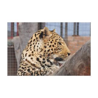 Leopard close-up canvas print