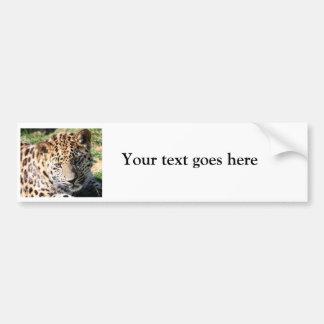 Leopard cub baby cute photo custom bumper sticker