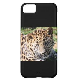 Leopard cub baby cute photo iphone 5 case mate i/d