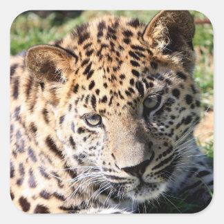 Leopard cub baby cute sticker, stickers,  gift square sticker