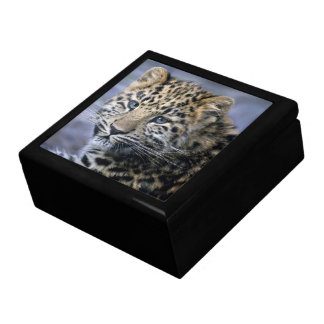 Leopard Cub Gift Box