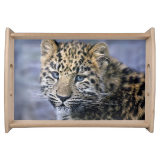 Leopard Cub Tray