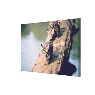 Leopard cubs on log canvas print