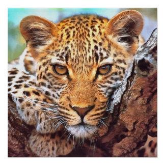 Leopard design poster