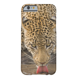 Leopard drinking, Greater Kruger National Park, Barely There iPhone 6 Case