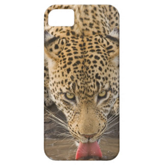 Leopard drinking, Greater Kruger National Park, iPhone 5 Covers
