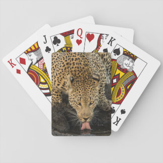 Leopard drinking, South Africa Playing Cards