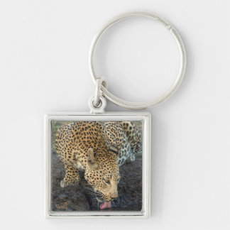 Leopard Drinking Water Key Ring