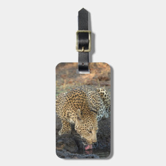 Leopard Drinking Water Luggage Tag