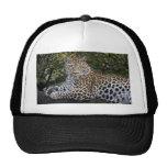 Leopard Empress Cap