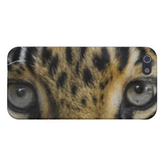 Leopard Face of Hunger iPhone 5/5S Cases