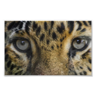 Leopard Face of Hunger Photographic Print
