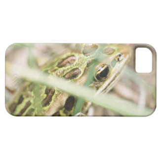 Leopard frog in grass iPhone 5 cover