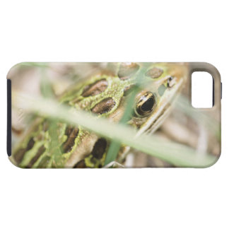 Leopard frog in grass tough iPhone 5 case