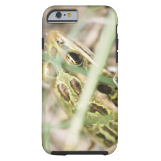 Leopard frog in grass tough iPhone 6 case