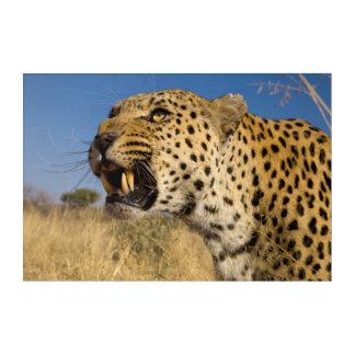 Leopard Growling Acrylic Print