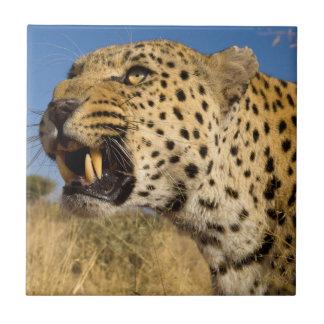 Leopard Growling Tile