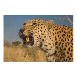 Leopard Growling Wood Canvas