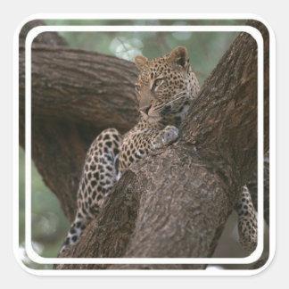 Leopard Habitat Stickers