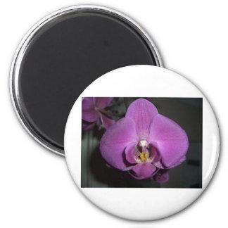 Leopard Head Yellow Purple Orchid 6 Cm Round Magnet