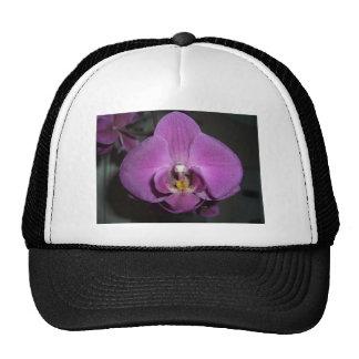 Leopard Head Yellow Purple Orchid Cap