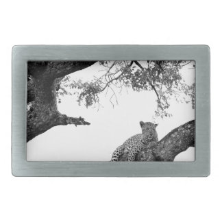 Leopard in a tree rectangular belt buckles
