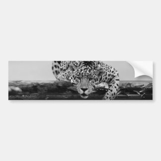 Leopard in black and white bumper stickers