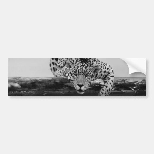 Leopard in black and white bumper stickers