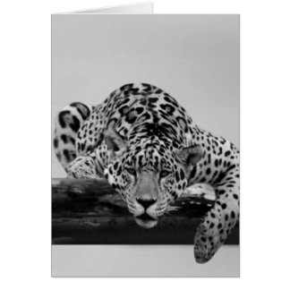 Leopard in black and white greeting cards