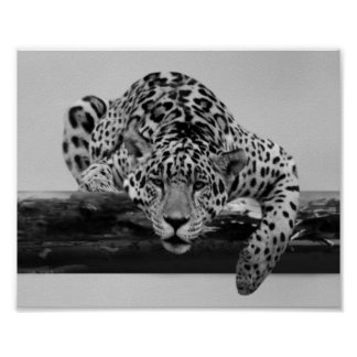 Leopard in black and white poster