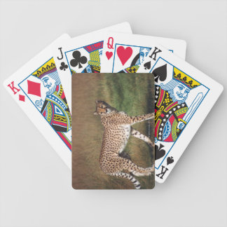 Leopard in plain bicycle playing cards