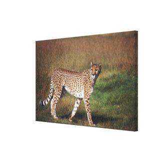 Leopard in plain canvas print