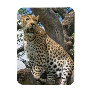 Leopard in Tree Flexible Magnet Magnet