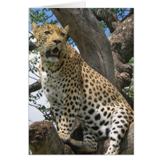 Leopard in Tree  Note Card