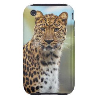 Leopard iPhone 3 Tough Cover