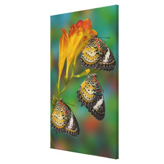 Leopard Lacewing tropical butterflies (Cethosia Canvas Print