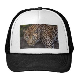 Leopard Lounging Cap